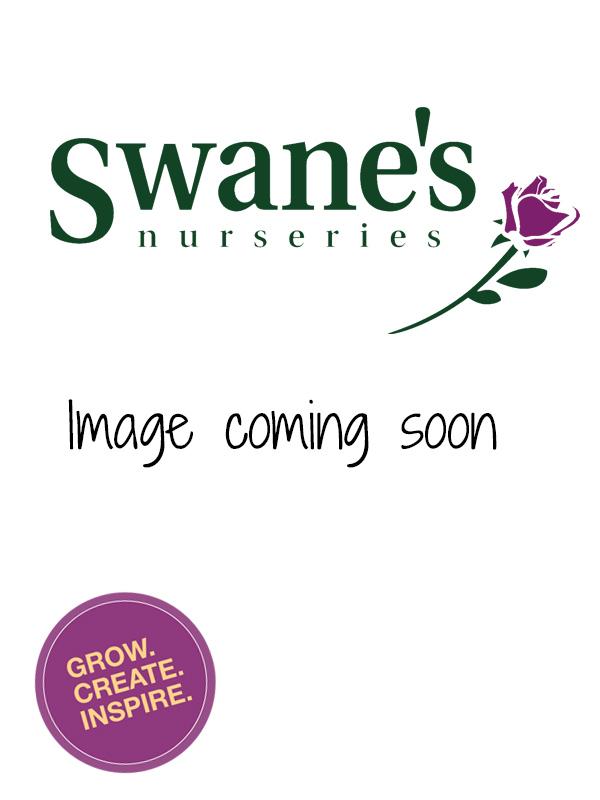 Statue - Silver Swan