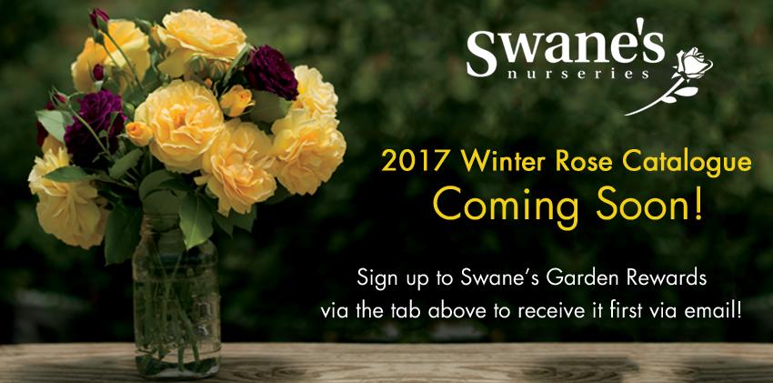 Rose-Catalogue-Soon
